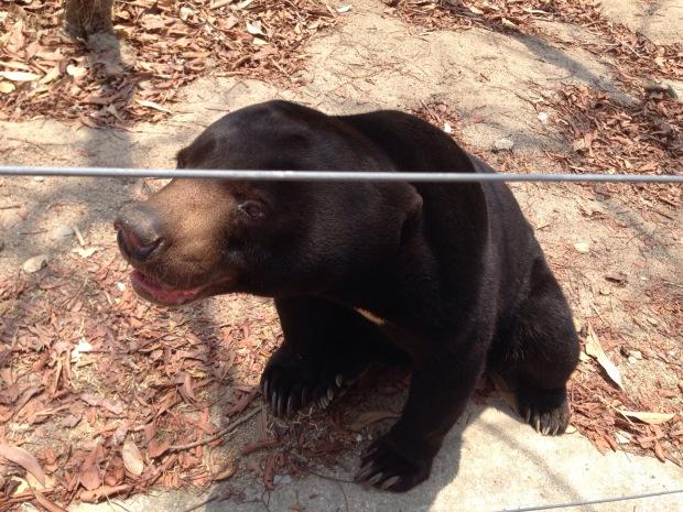 Bear at Tamao Zoo